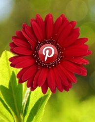 Pinterest blooms flower